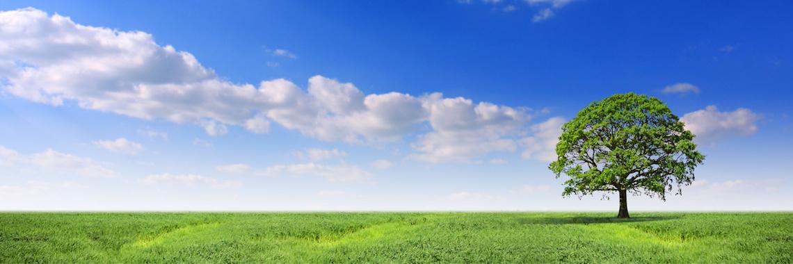 Pol Tica De Qualidade Ambiente E Seguran A Sociedade